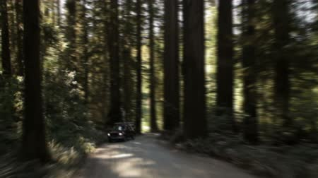 kapradina : Tracking down paved path in a redwood forest, road covered in shadow from dense canopy. One vehicle passes. California.