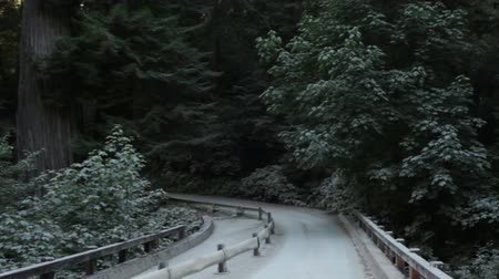 boomschors : Tracking over brug in een Redwood bos. Californië. Stockvideo