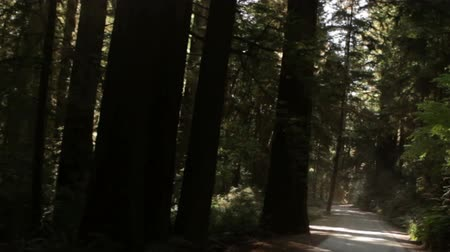 kapradina : Tracking down paved path in a redwood forest, road covered in shadow from dense canopy. California.