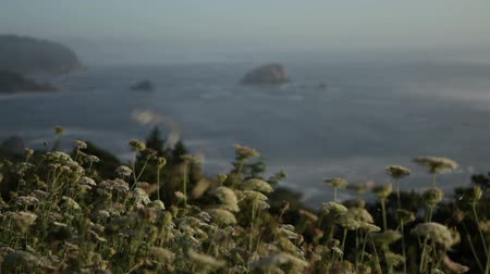 kapradina : Stationary shot from up on hillside looking out over trees to oceancoastline below. Large rocks projecting from ocean. Weeds at close frame in focus, ocean out of focus. California. Dostupné videozáznamy