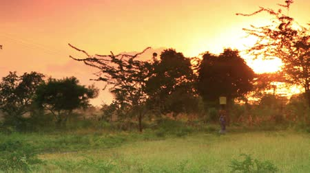 chata : A woman carries water at dawn in a village in Kenya two hours north of the Africa city Mombassa.