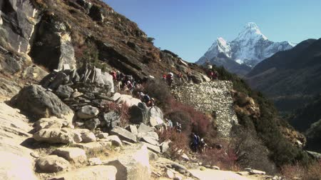 porters : A long line of hikers and sherpas carry gear up the trail in the direction of Ama Dablam. Stock Footage
