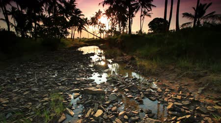кустарник : Rocky stream with background of trees under African sunset