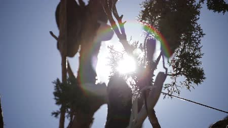 koronka : Close pan of tree branches with a few shoes hanging from them. Most of the focus is on sun rays breaking through branches. Wideo