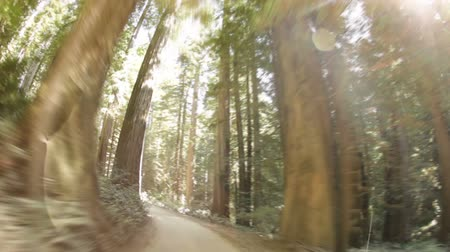 kapradina : Driving down dirt road through dense pine trees and ferns. Slight bowl effect. California.