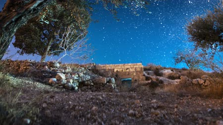 oliwki : Astro time-lapse with olive trees in Bethlehem, Israel. Panning shot. Wideo