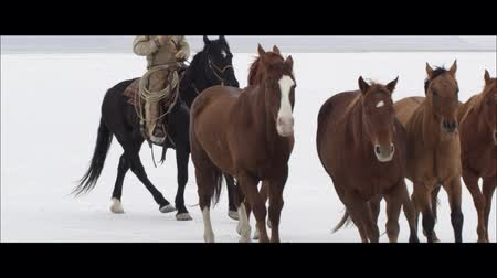 rachaduras : Slow motion wide screen of cowboy pushing horses on the Bonneville Salt Flats in Utah. Vídeos