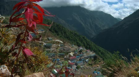 bazar : Small plants with red leaves and white flowers blowing in the wind on the slopes above the village of Namche Bazaar at the base of Mount Everest.