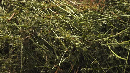 натюрморт : Static close-up of branches hay and grass. Стоковые видеозаписи