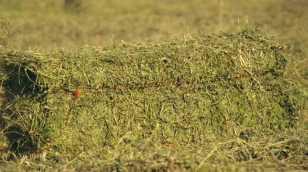 szalma : Medium shot of a hay baler dropping a bale of hay on the ground Stock mozgókép