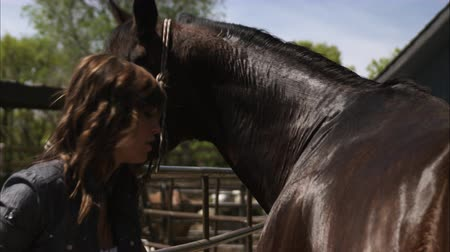 brushing : Slow motion shot of a woman grooming a horse with a currycomb. Filmed with a high speed camera. Stock Footage