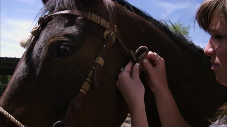 égua : Up close view of horse while girl tightens riens.