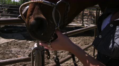 égua : Tilt slow motion show of a young woman adjusting her horses bridle. Filmed with a high speed camera.