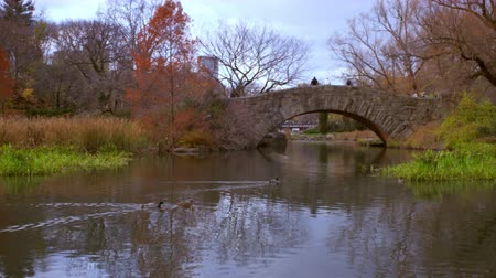 row : Panning shot of ducks swimming towards arched bridge in central park.