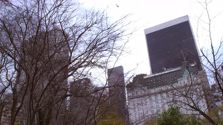 çatı : Dolly shot of buildings behind trees in New York City. The buildings are behind some trees that partially cover the city scape. Stok Video