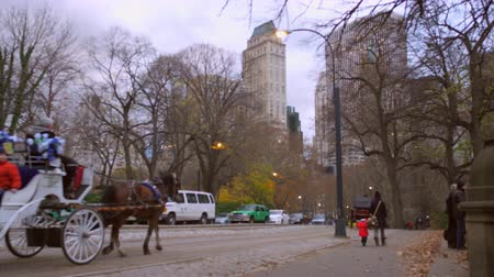 koń : Panning dolly shot of horses and carriages in New York City. There are people bundled up on the sidewalk and the trees have no leaves on them.