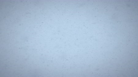 hóvihar : Shot of a blizzard. Snowflakes are seen in the shot.