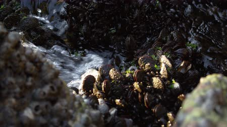 denteado : Static shot of waves washing over a jagged, seaweed covered reef in Rio. Filmed June 19, 2013.