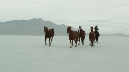 cavalos : Slow motion of cowboys riding with a herd of horses across the Bonneville Salt Flats in Utah, close.