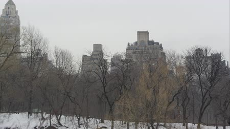 budynki : Slow motion pan from within Central Park in New York. Wideo