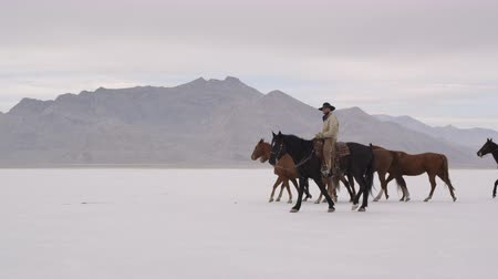 rachaduras : Slow motion of cowboys pushing herd of horses across the Bonneville Salt Flats in Utah, right to left 2. Vídeos