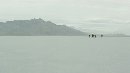 flâmula : Slow motion of cowboys riding with a herd of horses across the Bonneville Salt Flats in Utah, far 2. Stock Footage