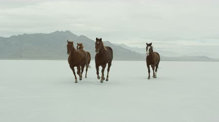 cavalos : Slow motion of horses running across the Bonneville Salt Flats in Utah.