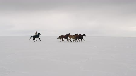 koń : Horses running from left to right with cowboys following waving hat on the Bonneville Salt Flats in Utah, 2.