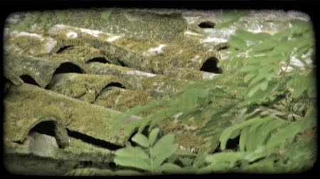 mohás : Close-up shot of shingles on a roof covered in moss with a tree in the foreground. Vintage stylized video clip. Stock mozgókép