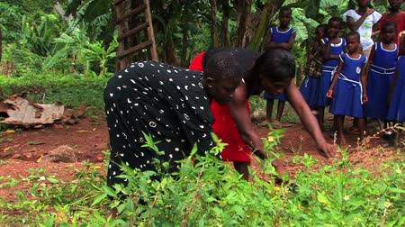 Medium shot. Deaf girl works in the garden with her family in a village in Ghana. Dostupné videozáznamy