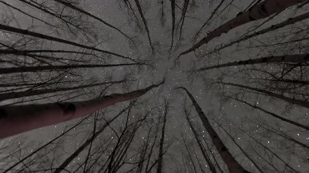 modrá obloha : This is a timelapse shot of stars in the sky as seen through the tops of the trees.