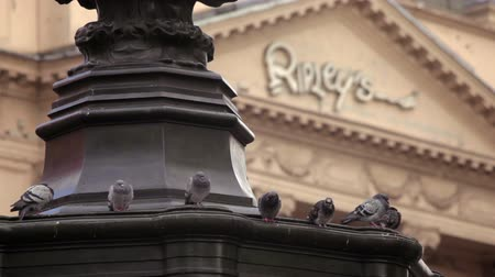 божество : A stationary shot of pigeons sitting on the foot of Eros statue on Piccadilly Circus in London. The entrance to Ripleys museum can be seen in the blurred background. Filmed on October 7, 2011.