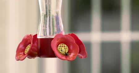 yabanarısı : Slow motion of wasp drinking from feeder as hummingbird comes in from the left.