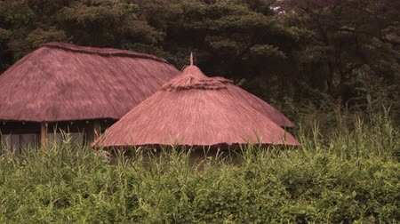 chata : Grass-covered roofs of three structures in a clearing. Filmed in Kenya, Africa.