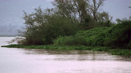 спокойные сцены : A small sliver of land covered with trees and bushes invades a lake. Filmed in Kenya, Africa.