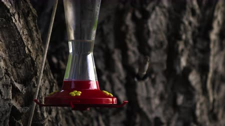 garganta : A hummingbird flying up to a bird feeder and drinking from it.