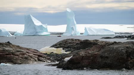 Антарктика : View of the large icebergs from the stone shore. Andreev.