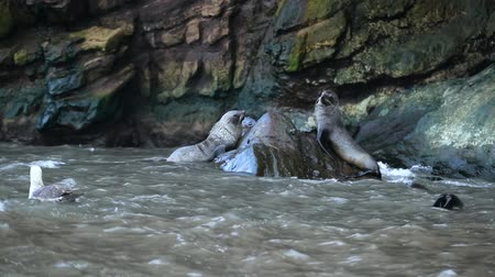 climbed : Seals climbed onto a wet stone surrounded by water. Andreev. Stock Footage