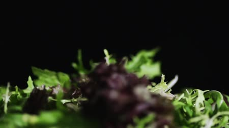 repolho : Salad leaves fall down in slow motion.