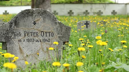 wwi : Pan shot of German soldiers tombstones, of the Great War and WWII, raising from the sunny green grass with dandelions.