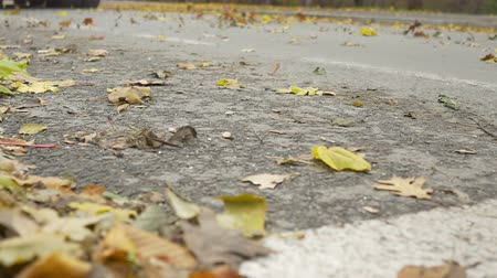 curbside : Autumn leaves are swept away by a truck going on the street. Stock Footage