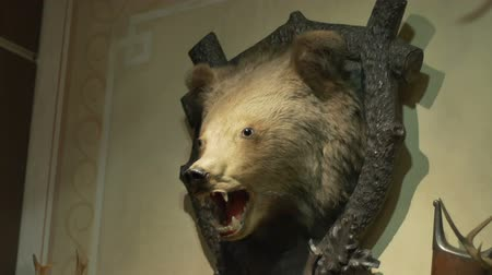 bearish : Bear head on the wall mounted as hunting thropy of a fearful beast.