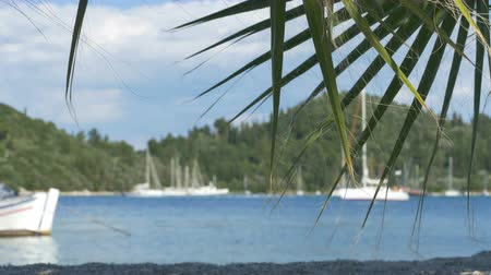 герань : Port and yachts view through the palm tree leaves.