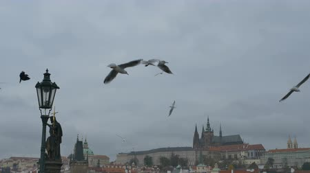 bridge man made structure : Flying seagulls over Prague`s famous medieval Charles Bridge. Stock Footage