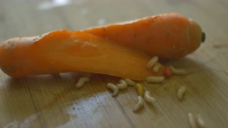 wiewiórka : Disgustful worms crawling over a left carrot in kitchen. Wideo