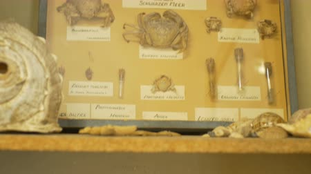 relics : Lots of animal skeleton in Biology cabinet.