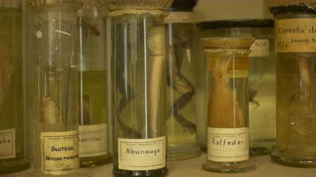 feto : Old formalin jars with animals in lab. Vídeos