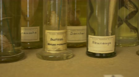faculty : Old glasses and jars full of formalin with animals inside. Stock Footage
