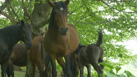 esplendor : Group of horses and a foal in the woods.