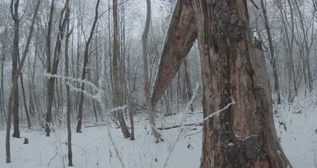 View of a fallen long tree snowy trunk.